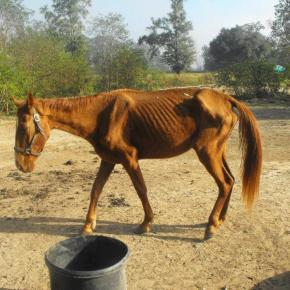 Local shelter helps authorities combat horse neglect